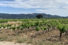 Provence 2019 - vinice v Rasteau